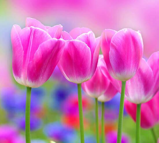 Картинки на фон рабочего стола цветы